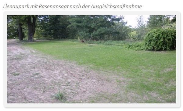 Lienaupark mit Rasenansaat1