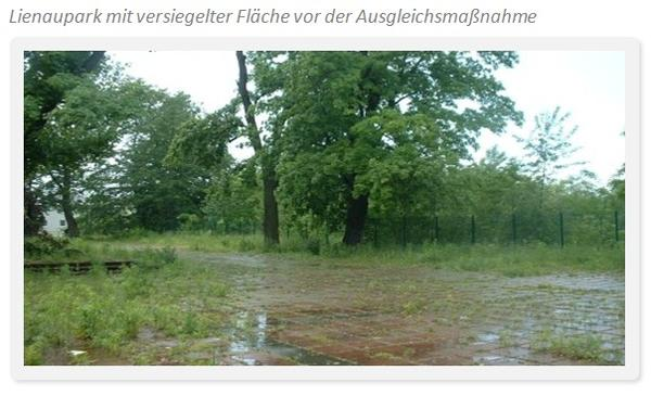 Lienaupark mit versiegelter Fläche1
